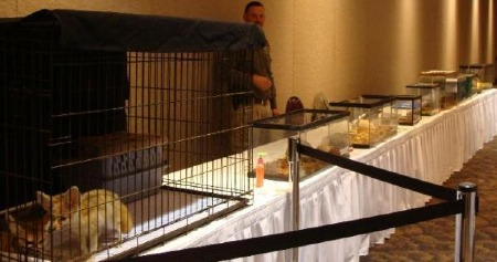 Sample set-up of over a dozen different animals in various cages and tanks, covering five eight foot tables.