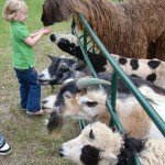 petting zoo favorites