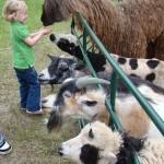 petting zoo favorites